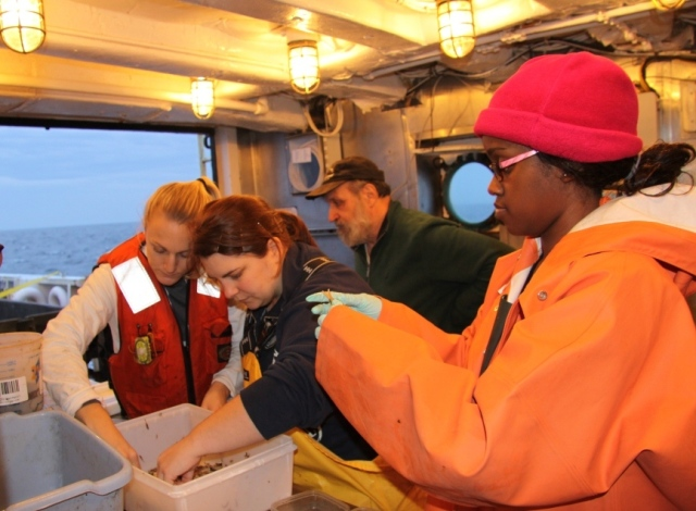 Sara Bornhoeft, Andrea Stoneman and, Candace Rogers sort through marine life brought up by a trawl net